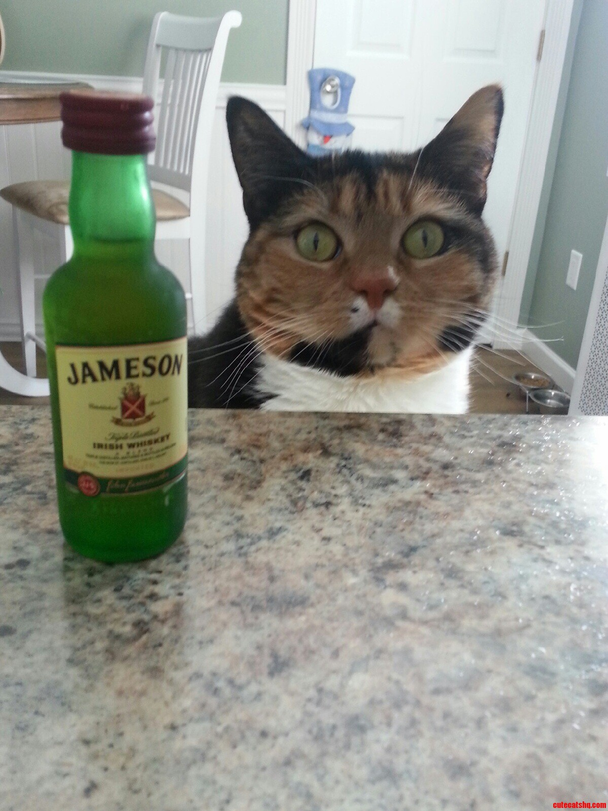 Another drink please bartender