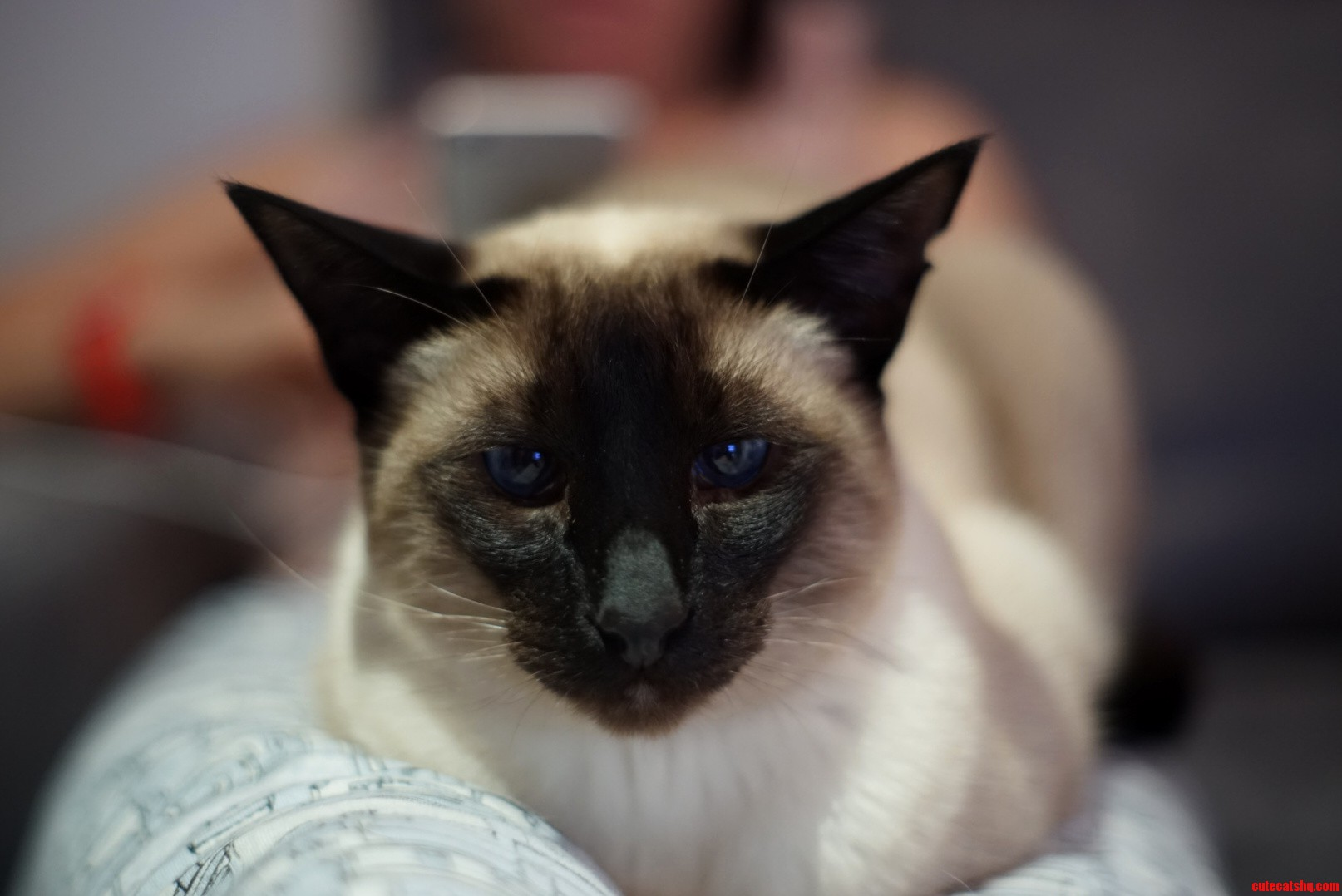 Bought some cheap old lenses to try on my camera and tested it on my siamese.