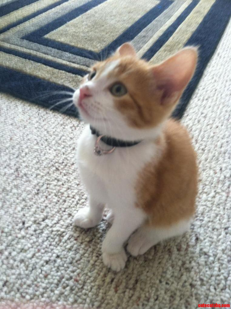 Can you imagine that this little cat helped a guy propose to his girlfriend