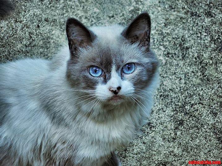 Defiant blue eyes.