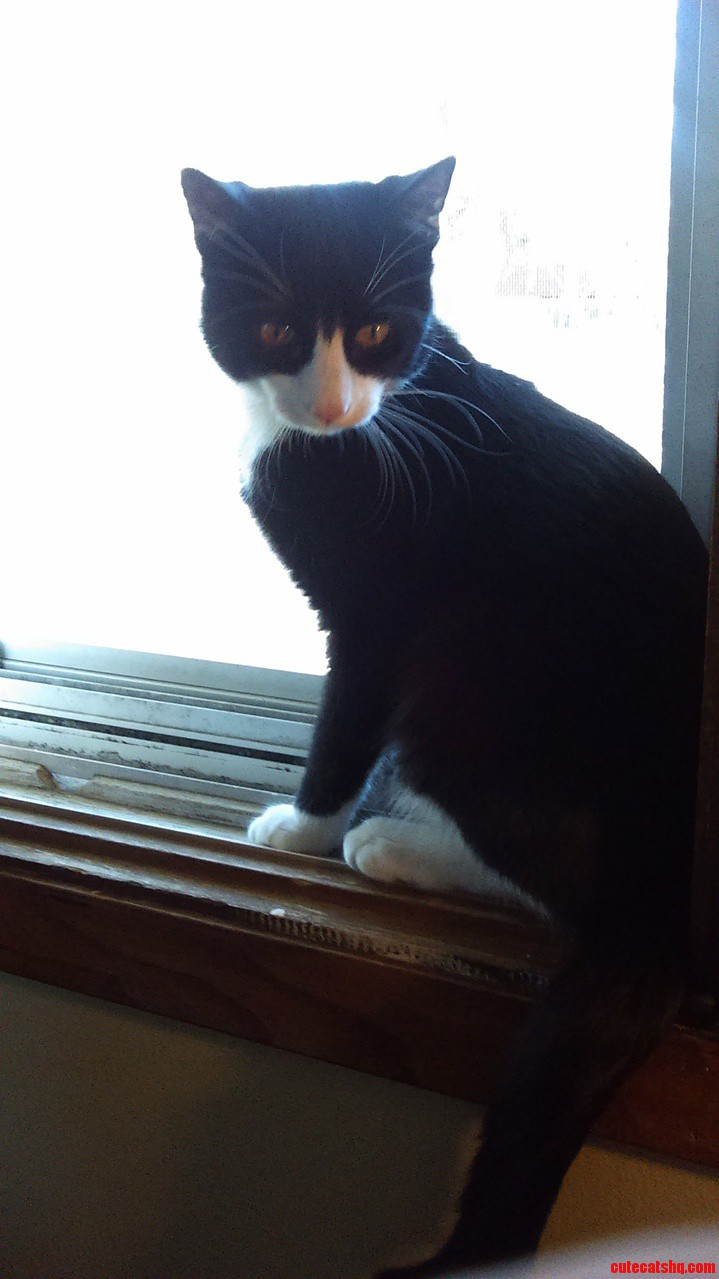 Fluffy likes the window…