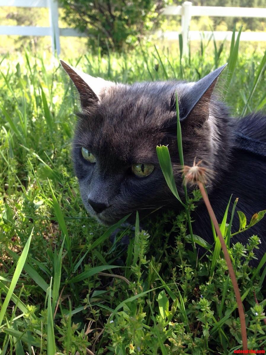 Grass green.