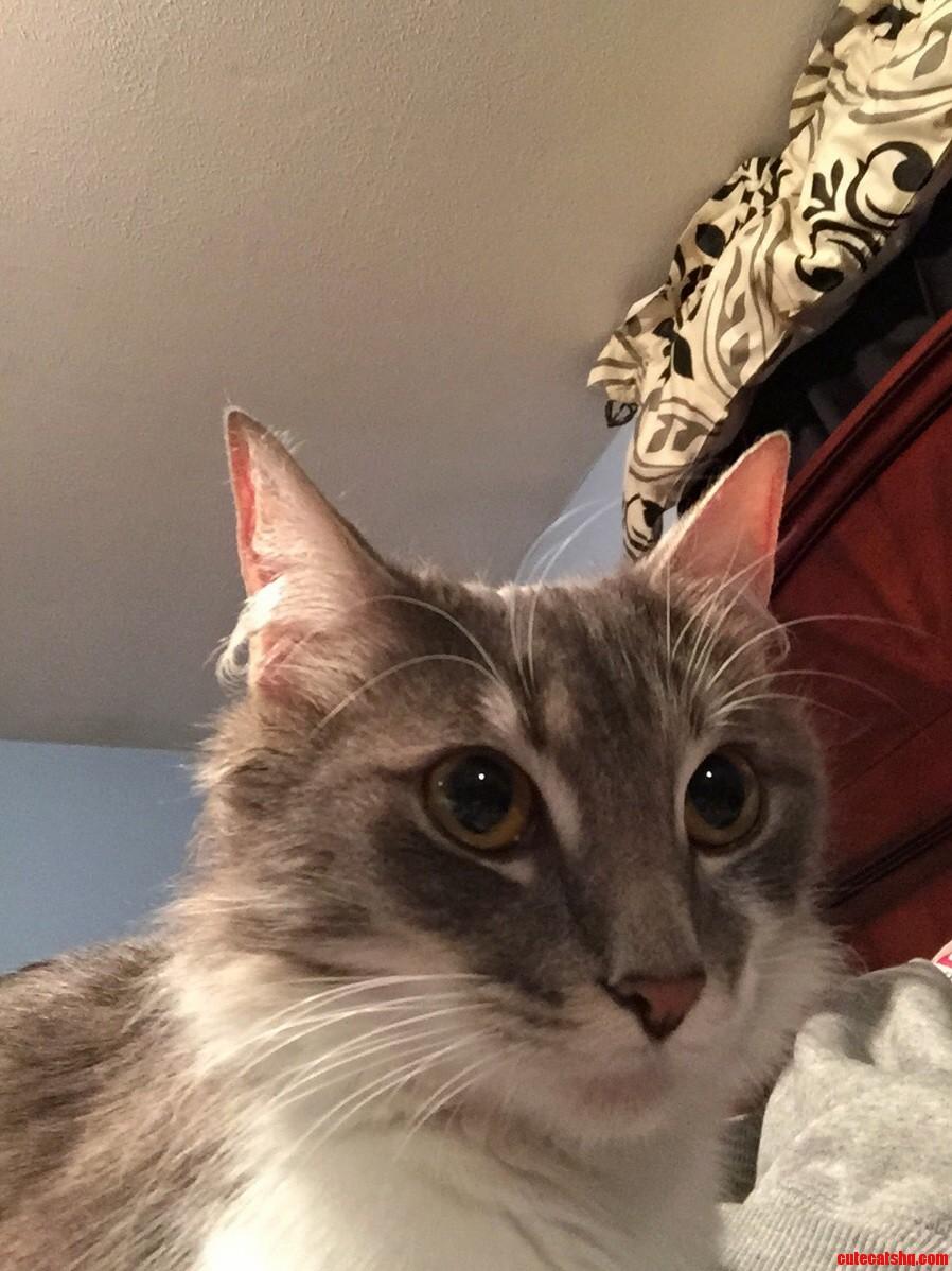 Grey fox selfie