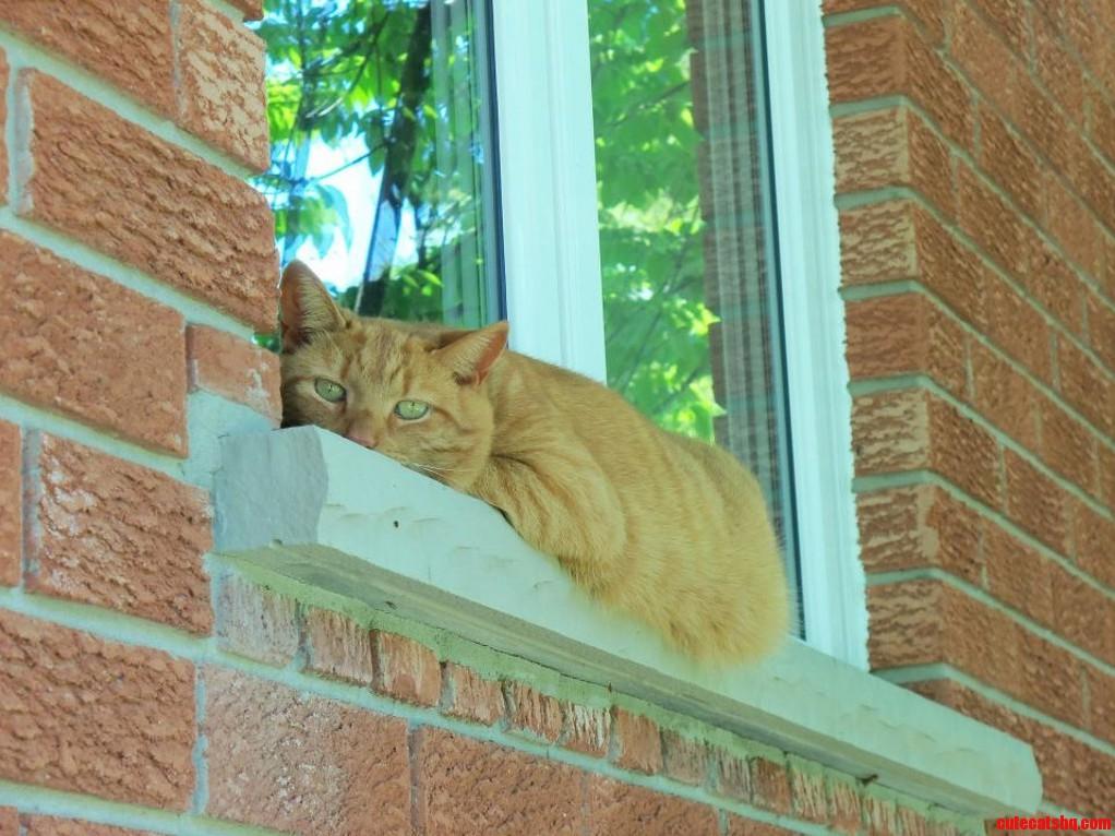 Heres garfield my handsome cat enjoying the sun last summer