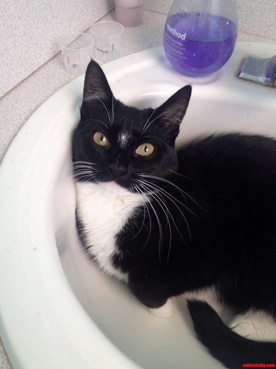 Hey rcats meet odi featuring her favorite sink.