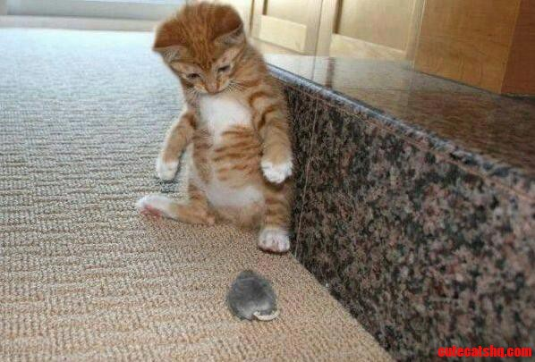 House kitty meets mouse… not sure what to do.