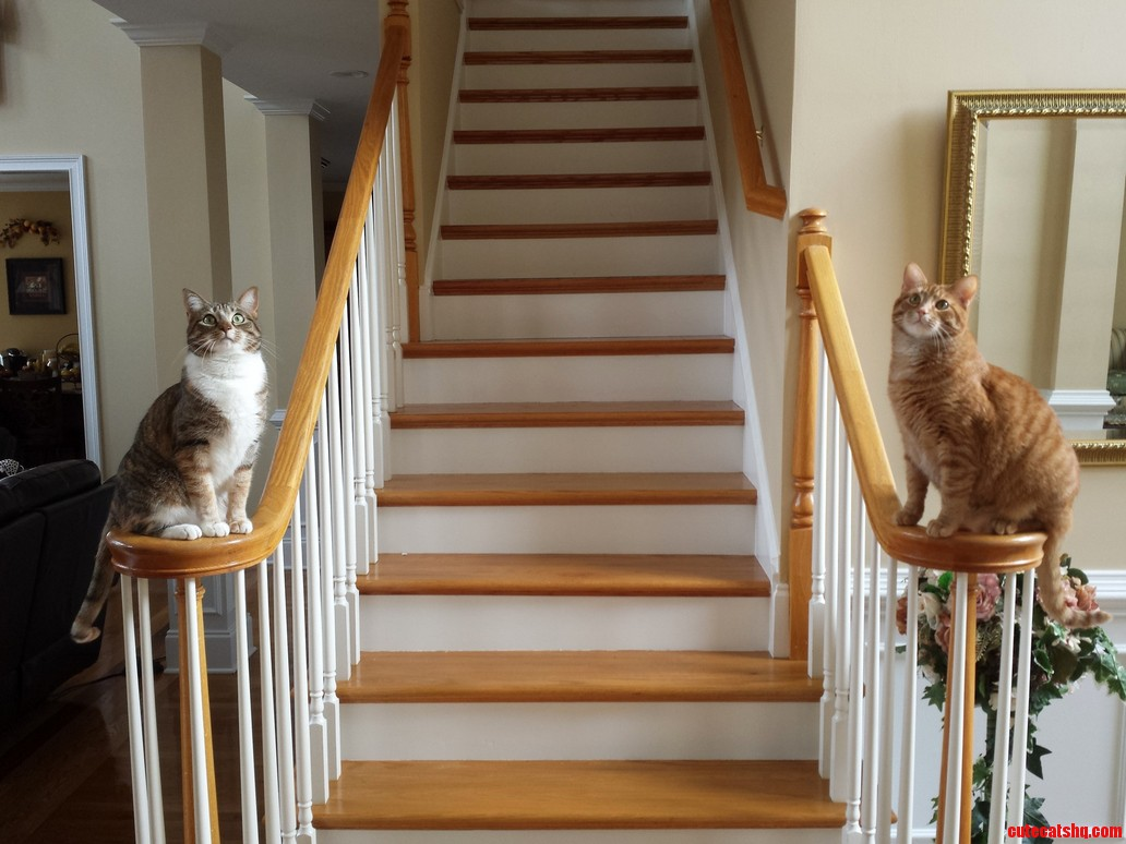 How i prefer my cats to greet me.