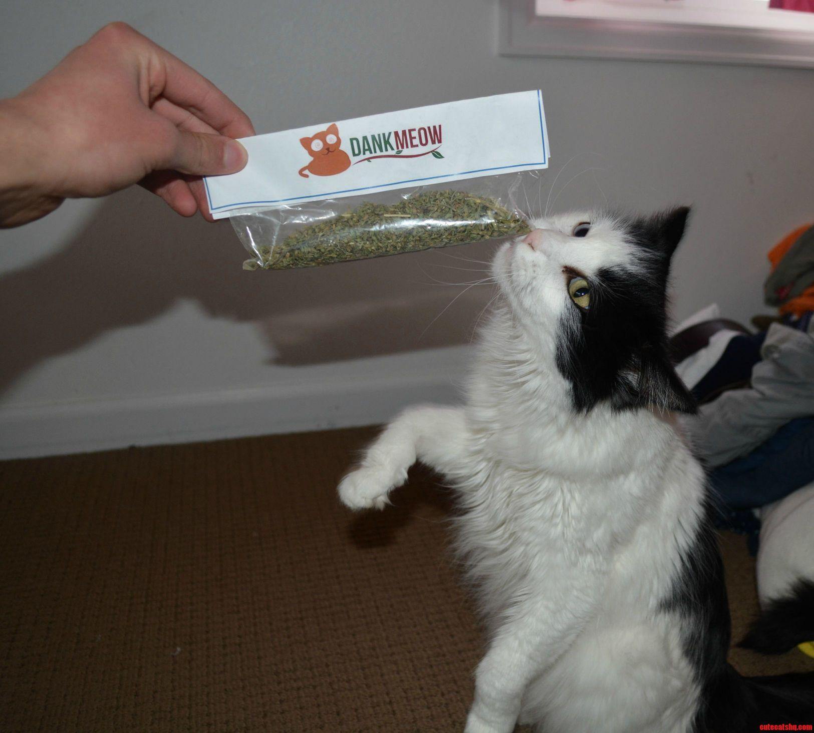 I think my cat likes her new catnip