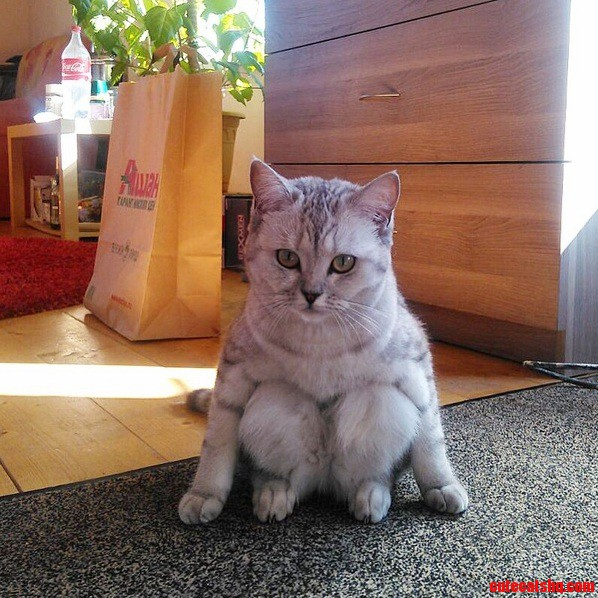 I ve never seen a cat sit like this before.
