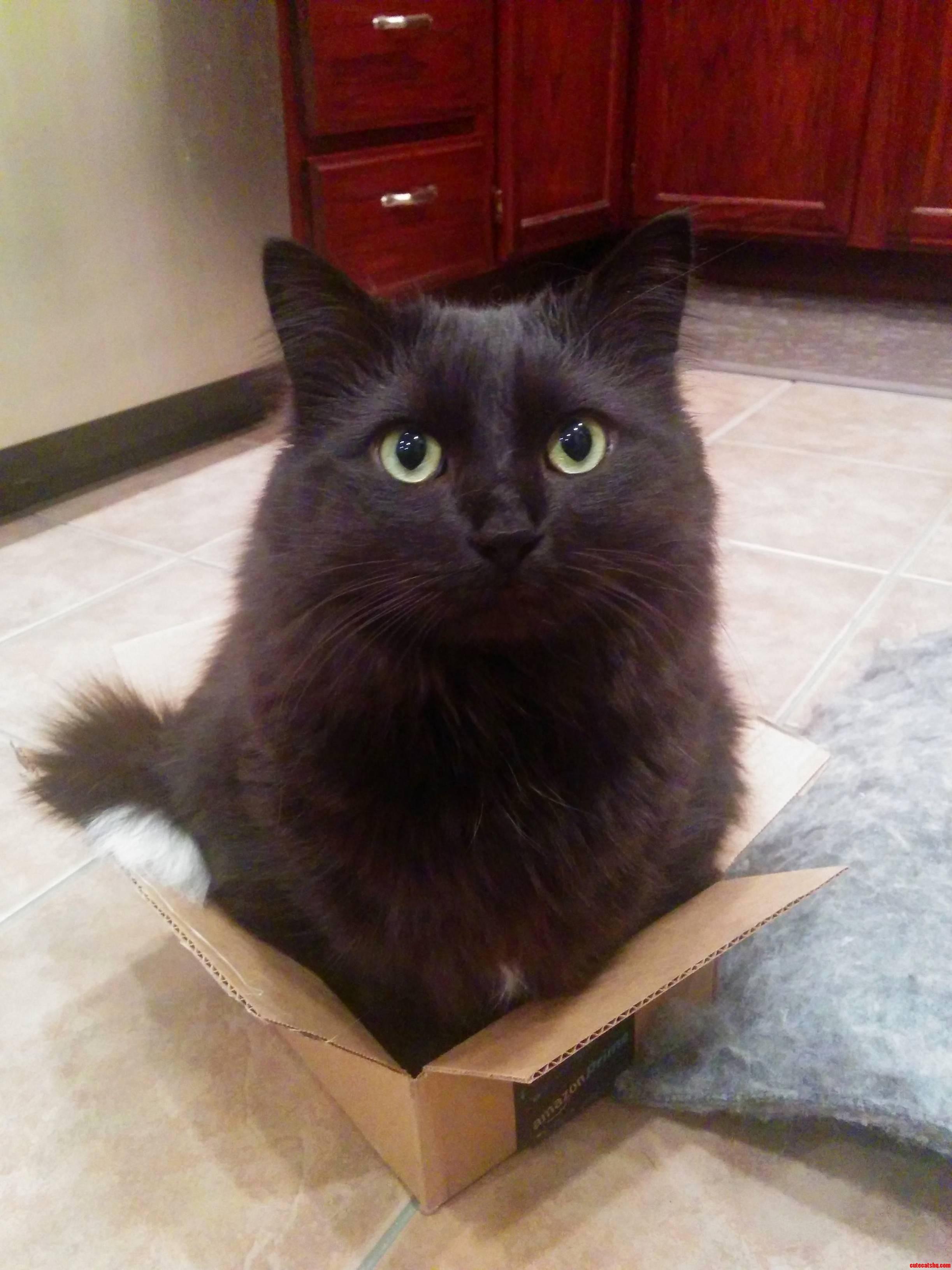 Just a peanut in a box.