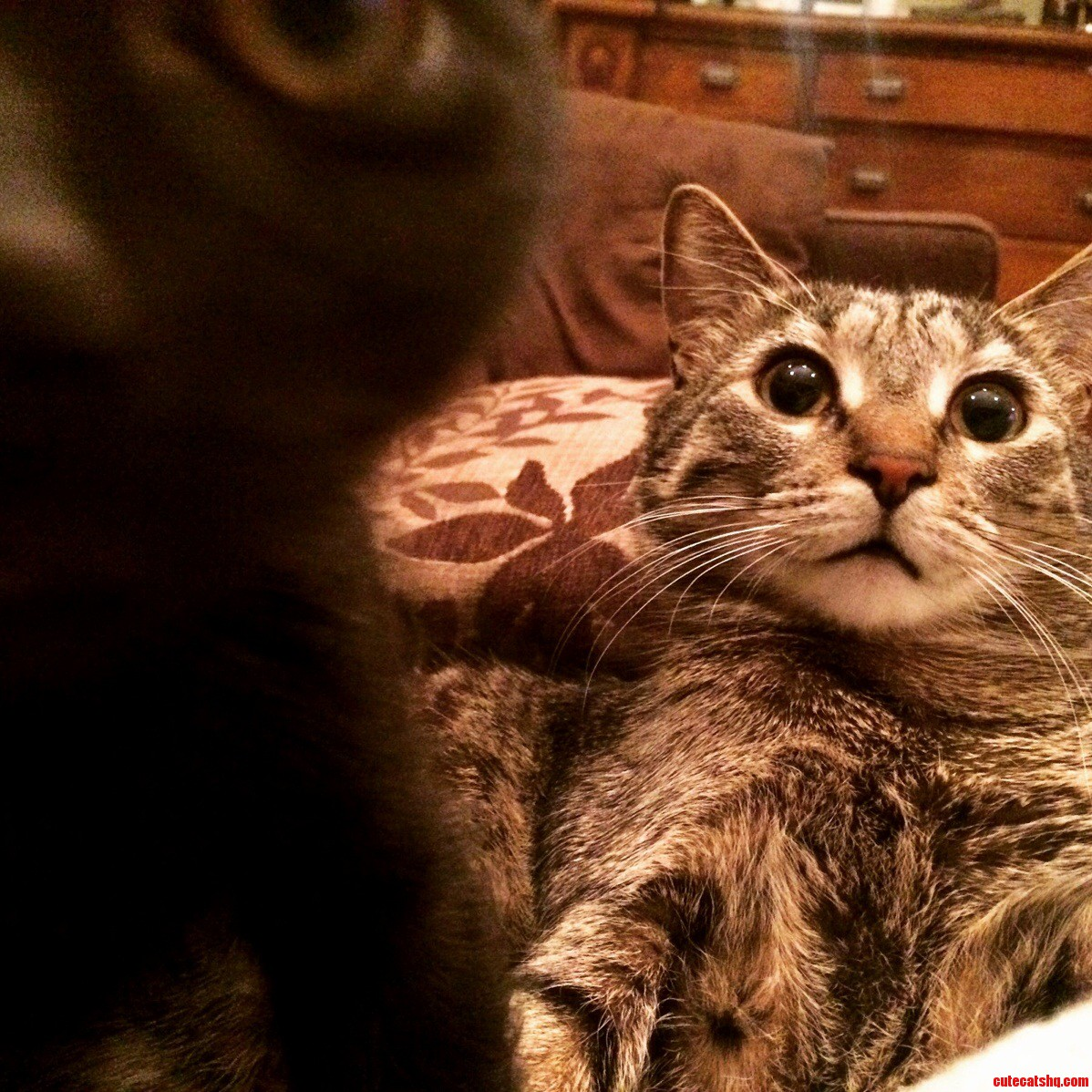 Kitteh photobomb