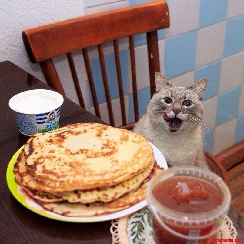 Kitten eats pancakes
