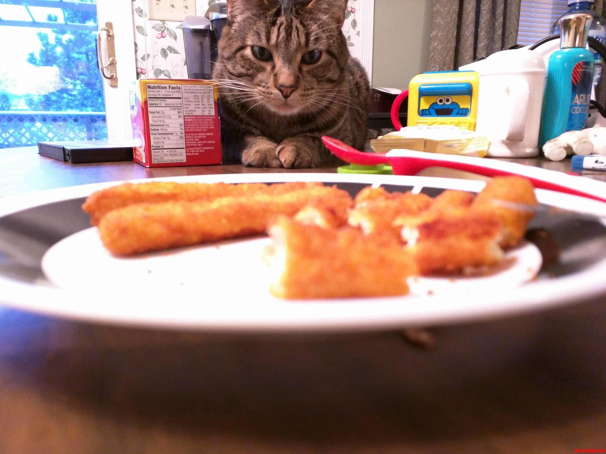 Kitty wants babys chicken fingers