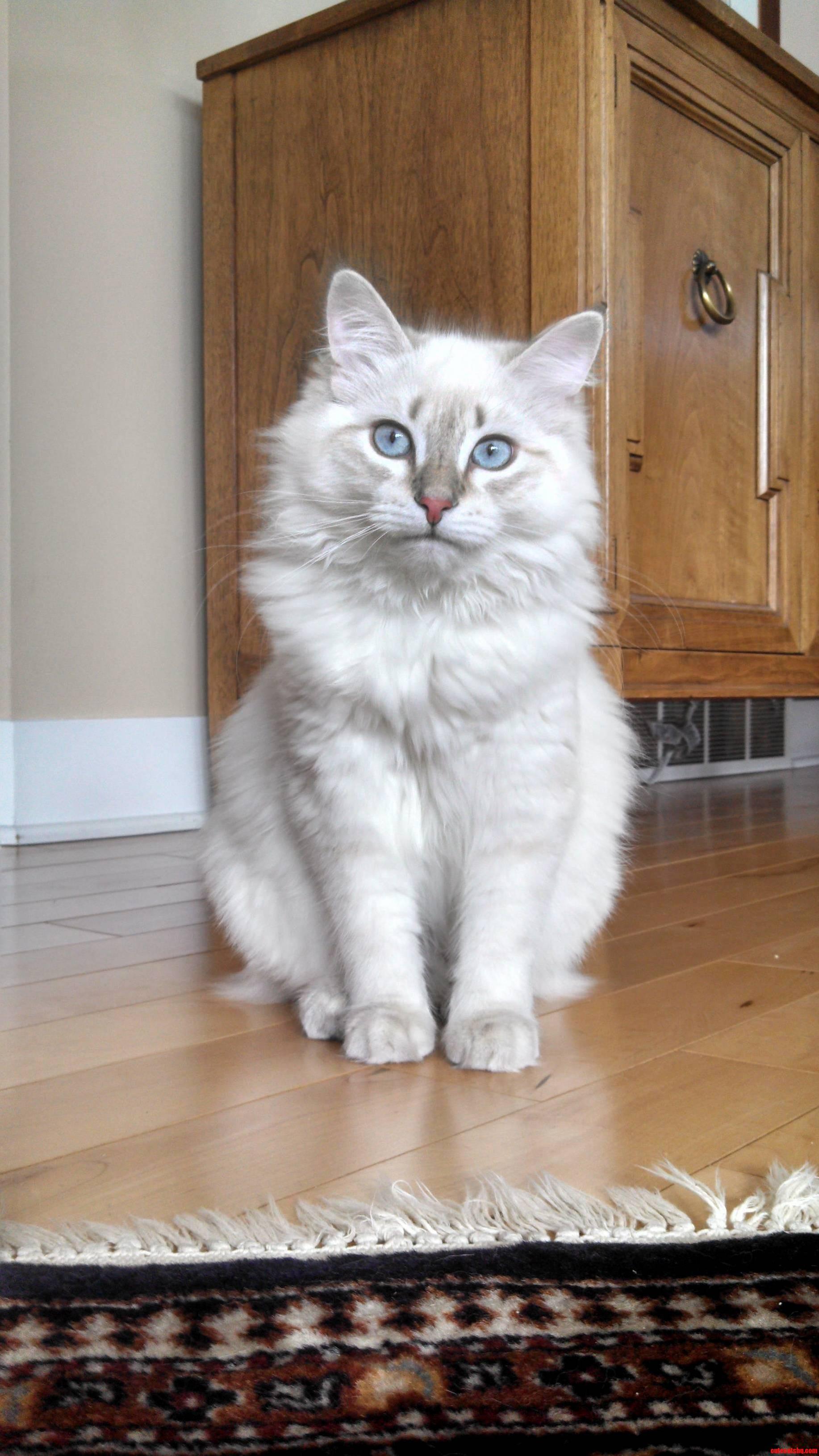 Meet my new cat pixie
