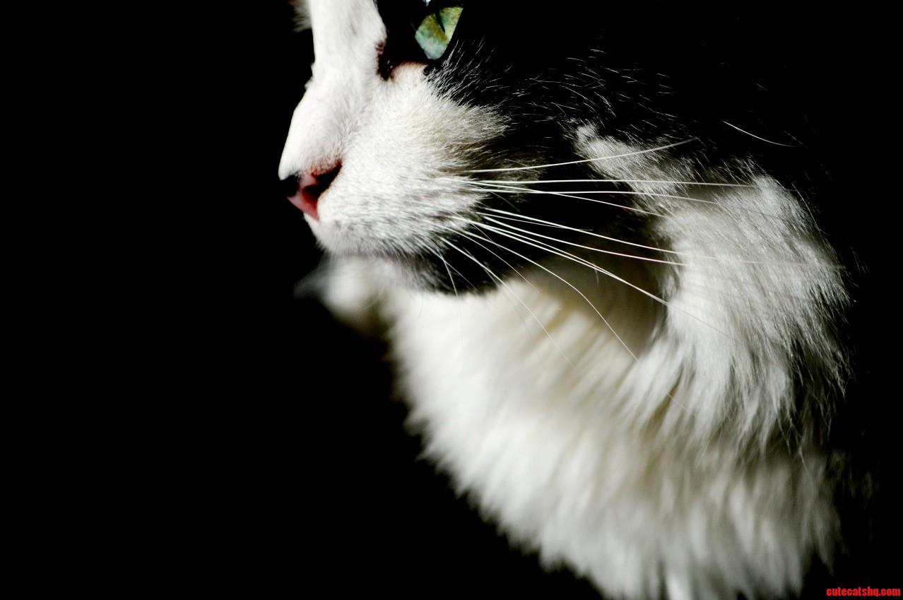 My beautiful cat maya.