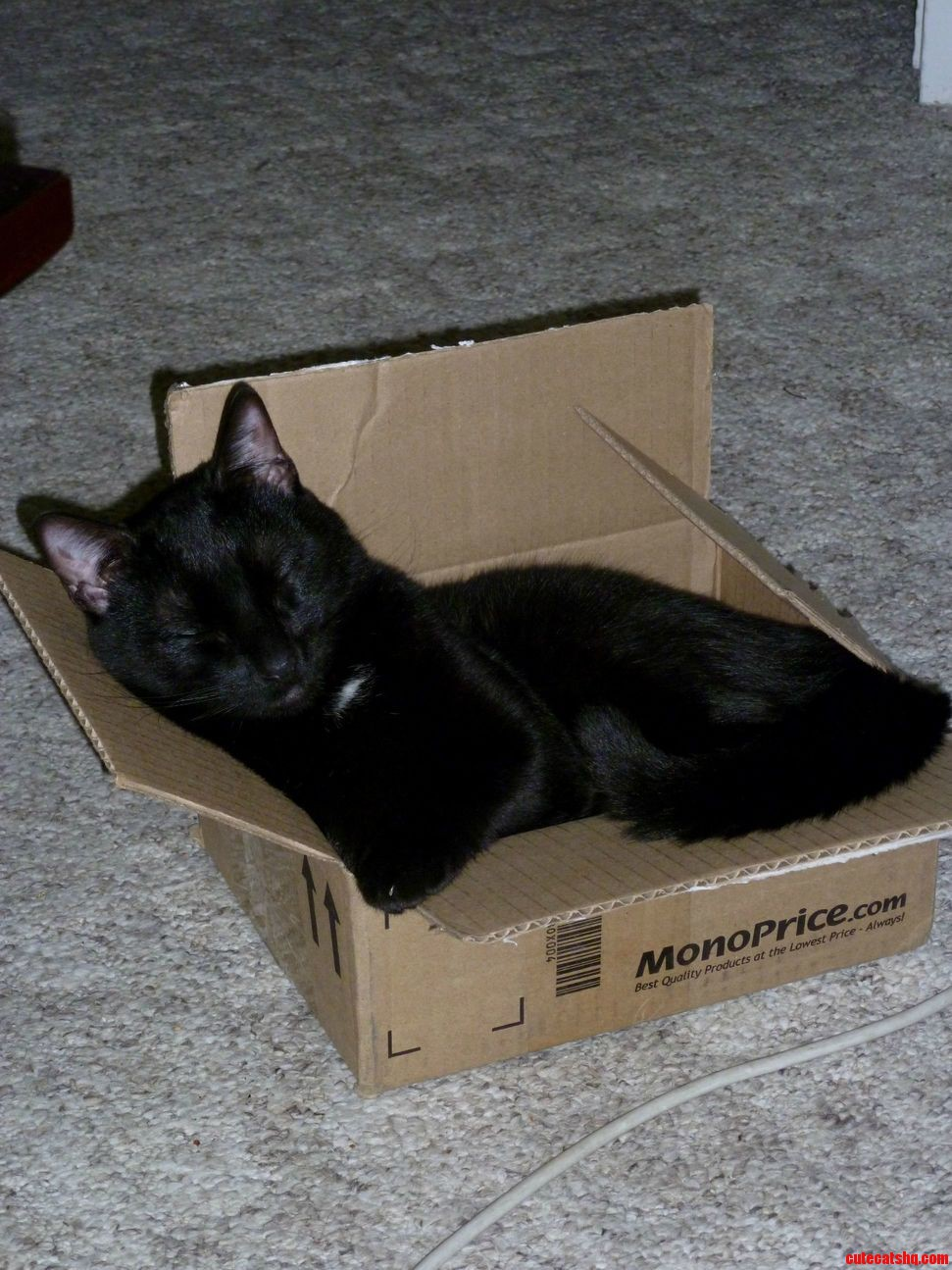 My box cat syd for black cat friday