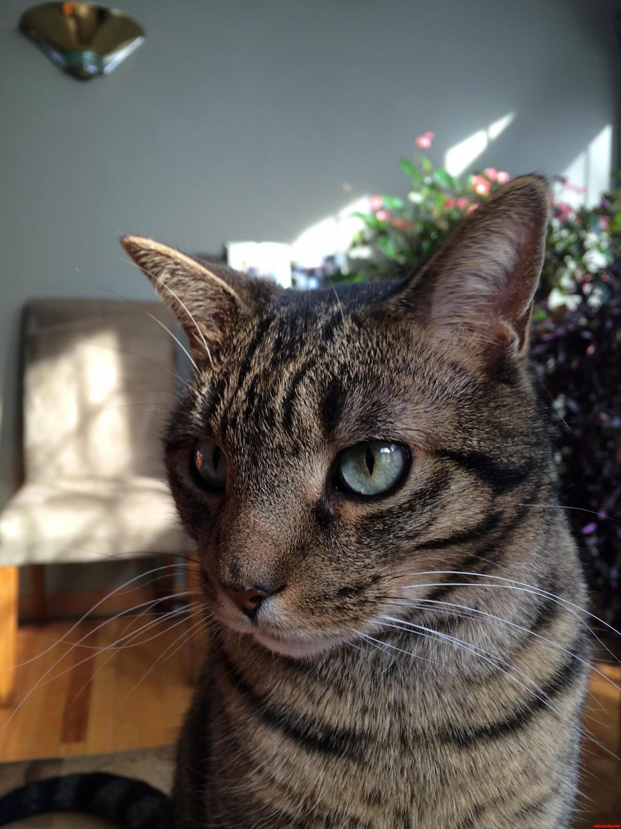 My cat mew
