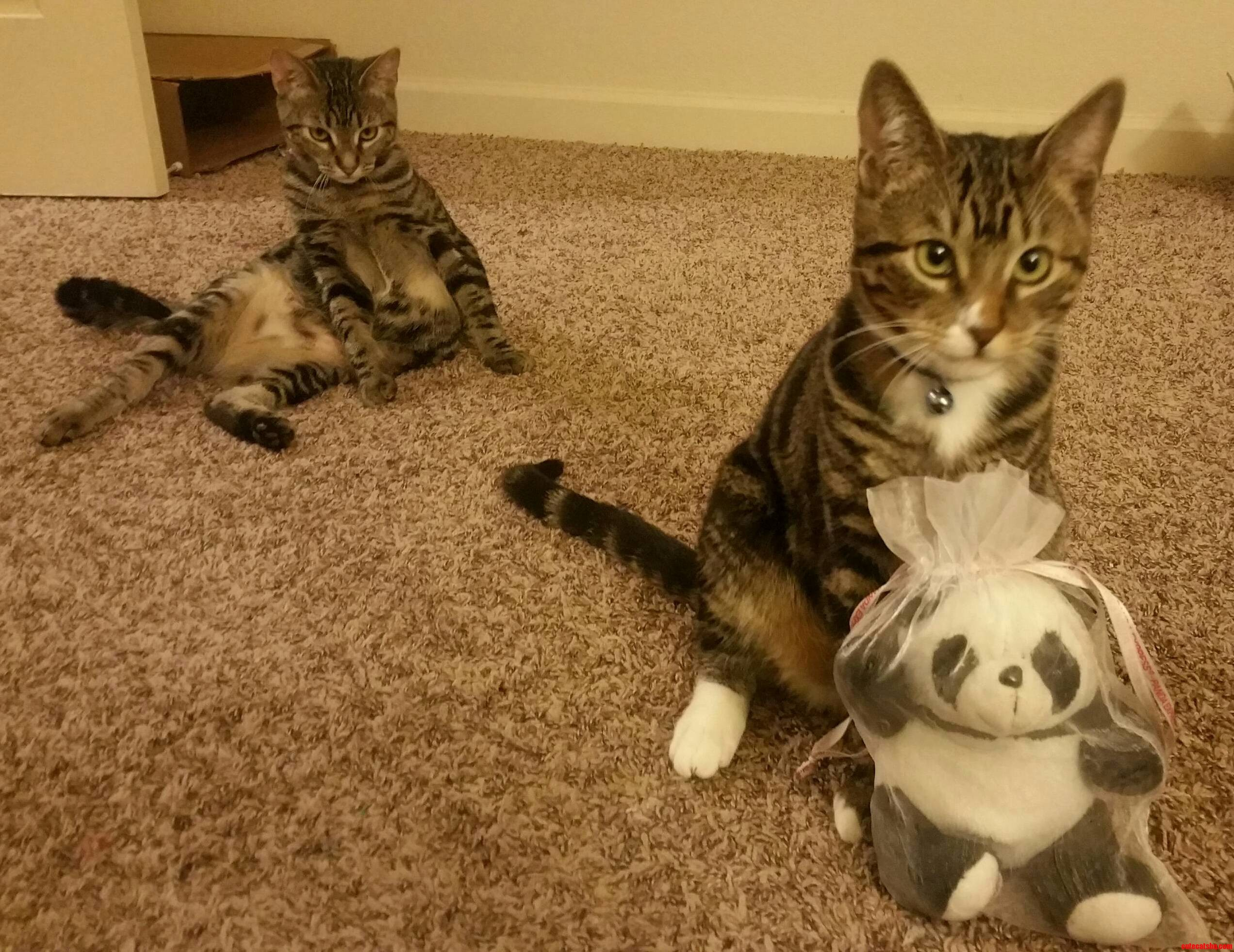 My kitty loves his panda but he doesnt like to share.