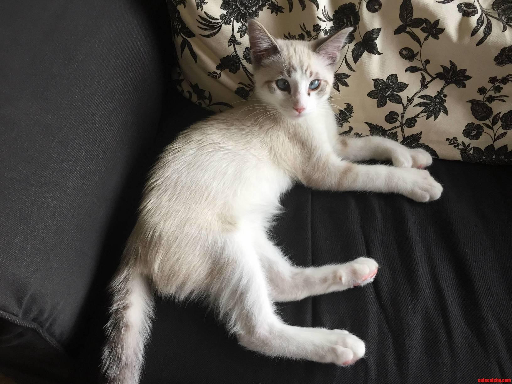 My polydactyl kitten casper is a little crosseyed