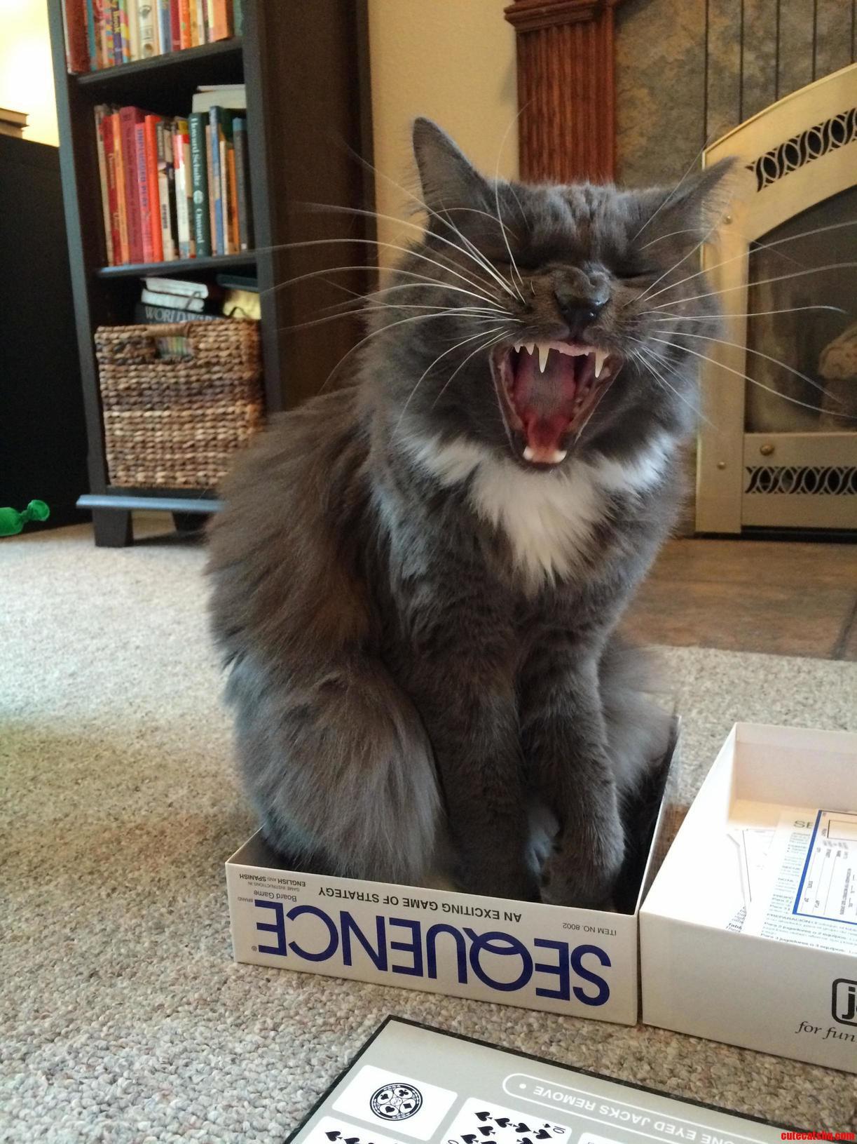 One. big. yawn.