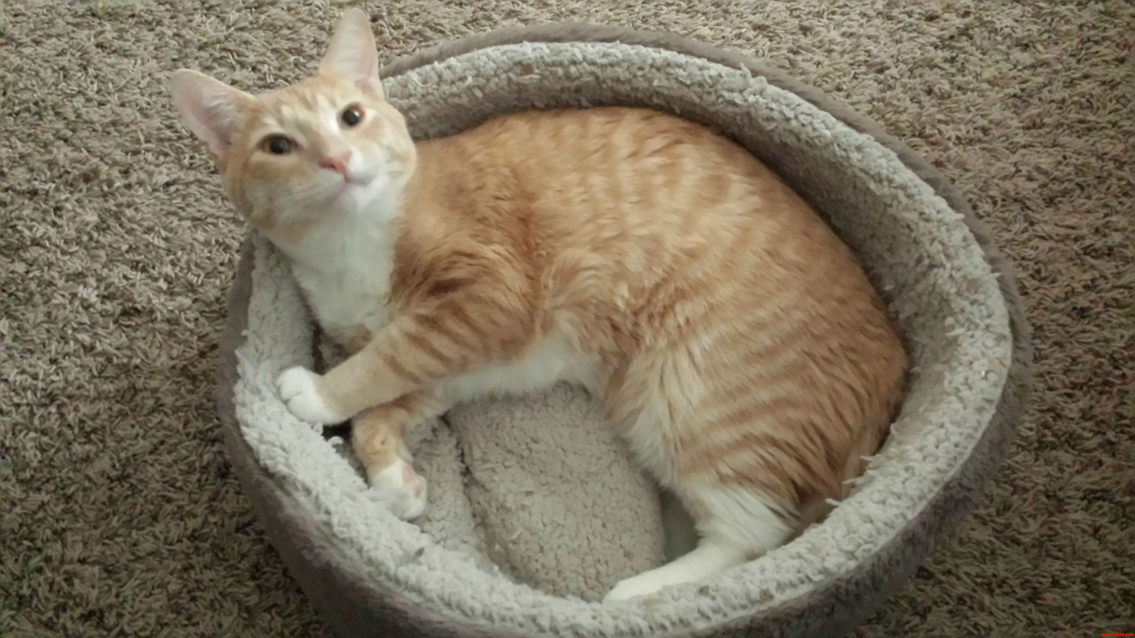 Pixels finally using his cat bed.