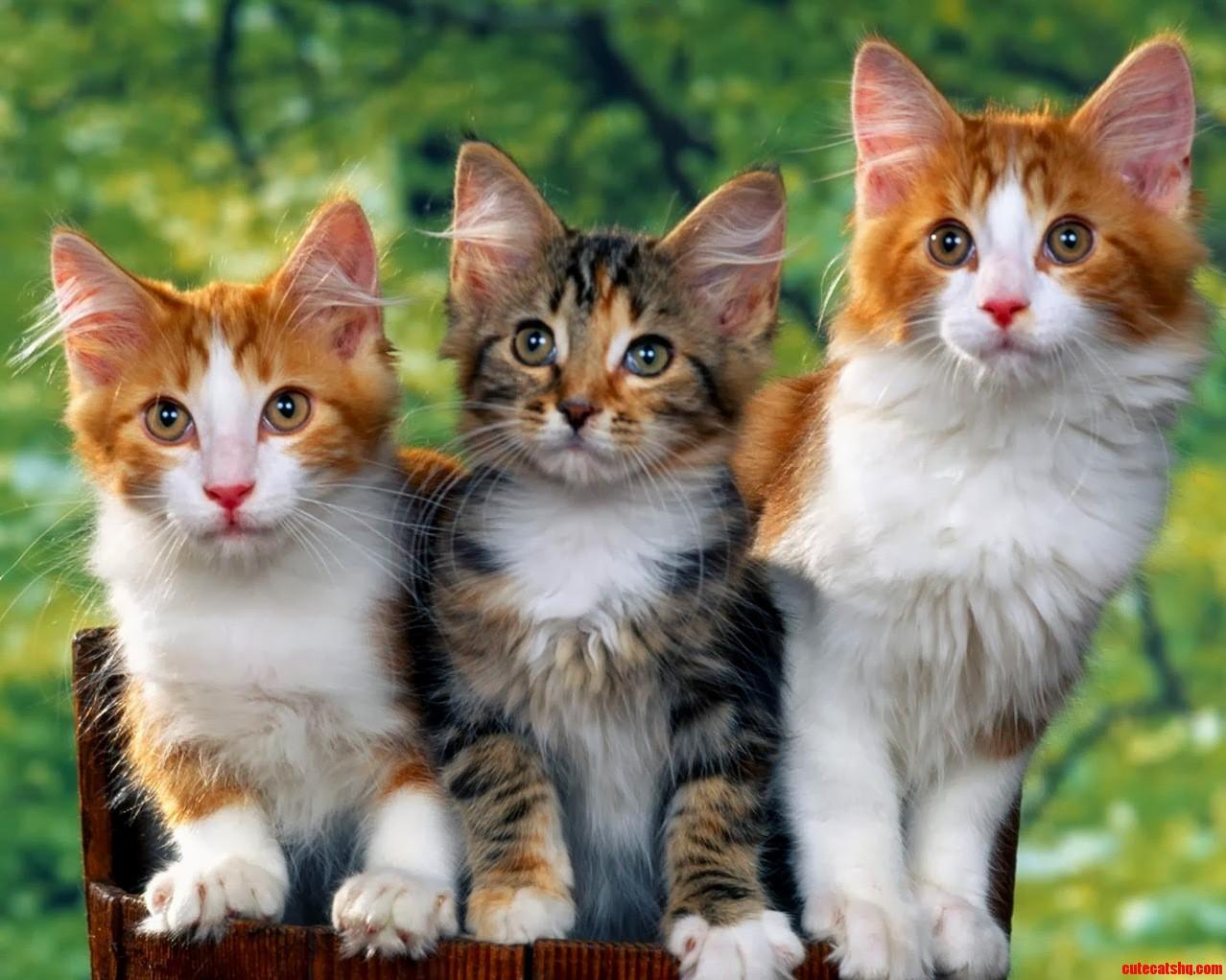Pretty cute cats