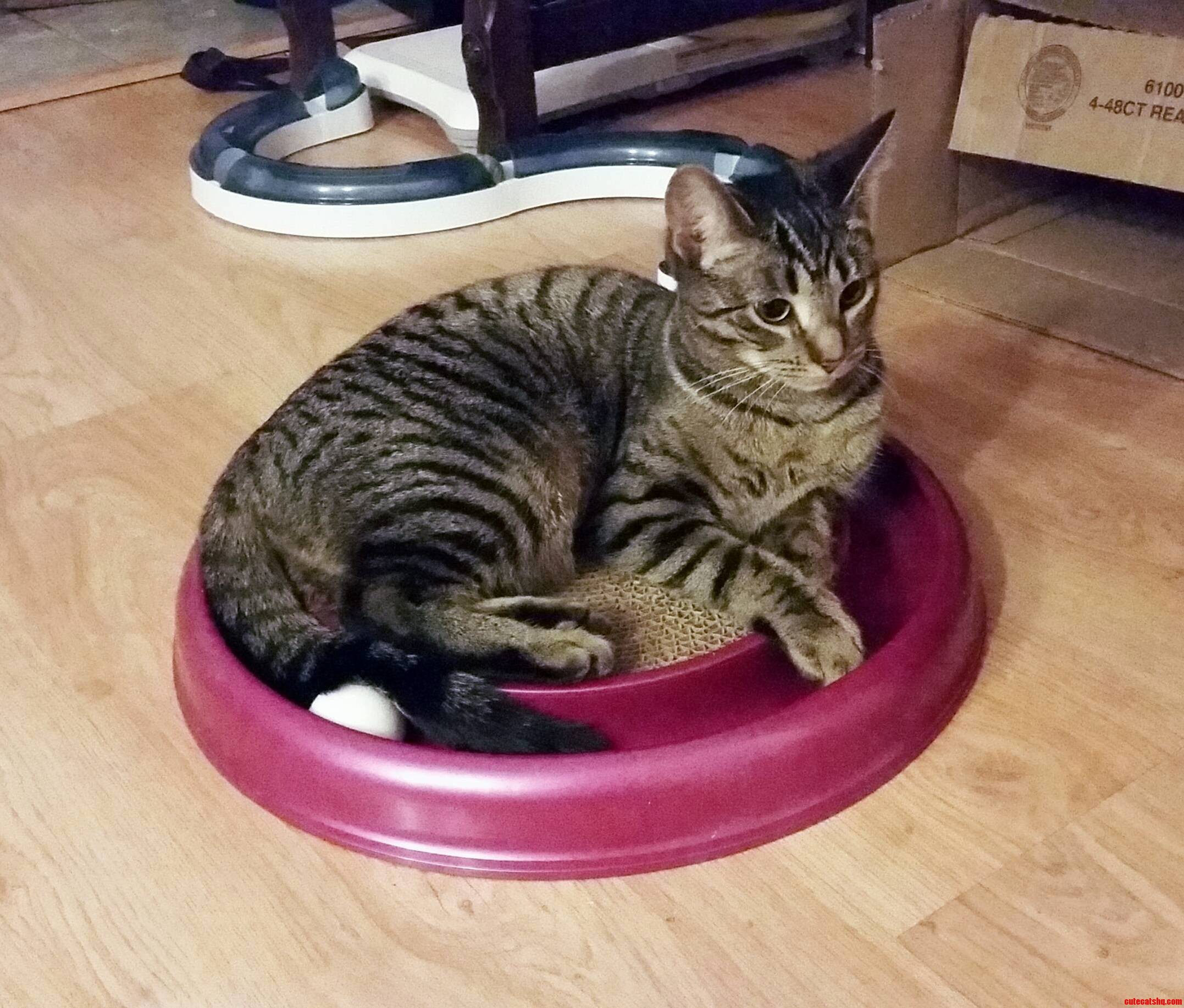 Sitting pretty on her toy.