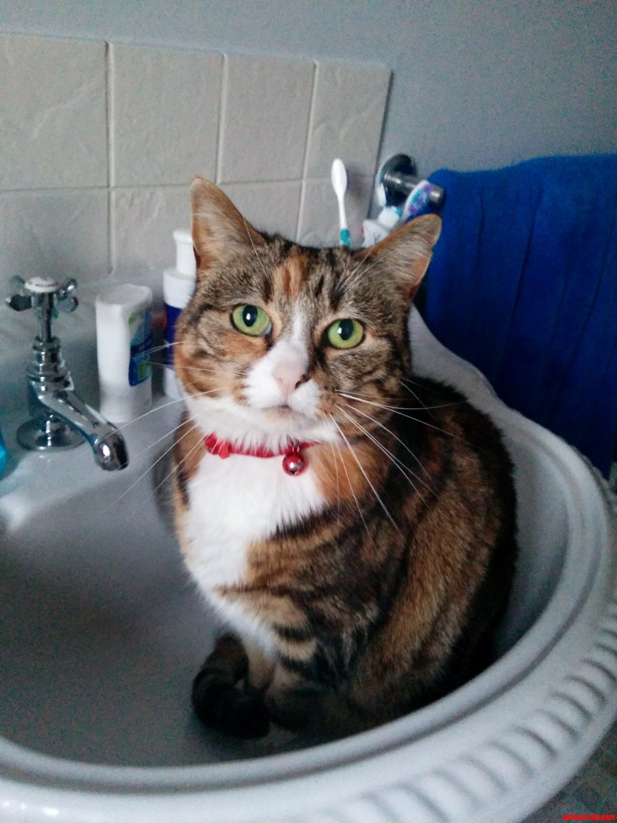 So apparently cats like sinks now.