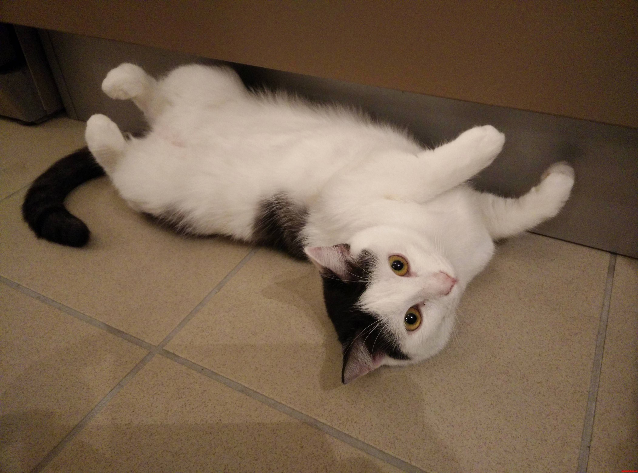 Sometimes my cat likes laying against the wall and watch you