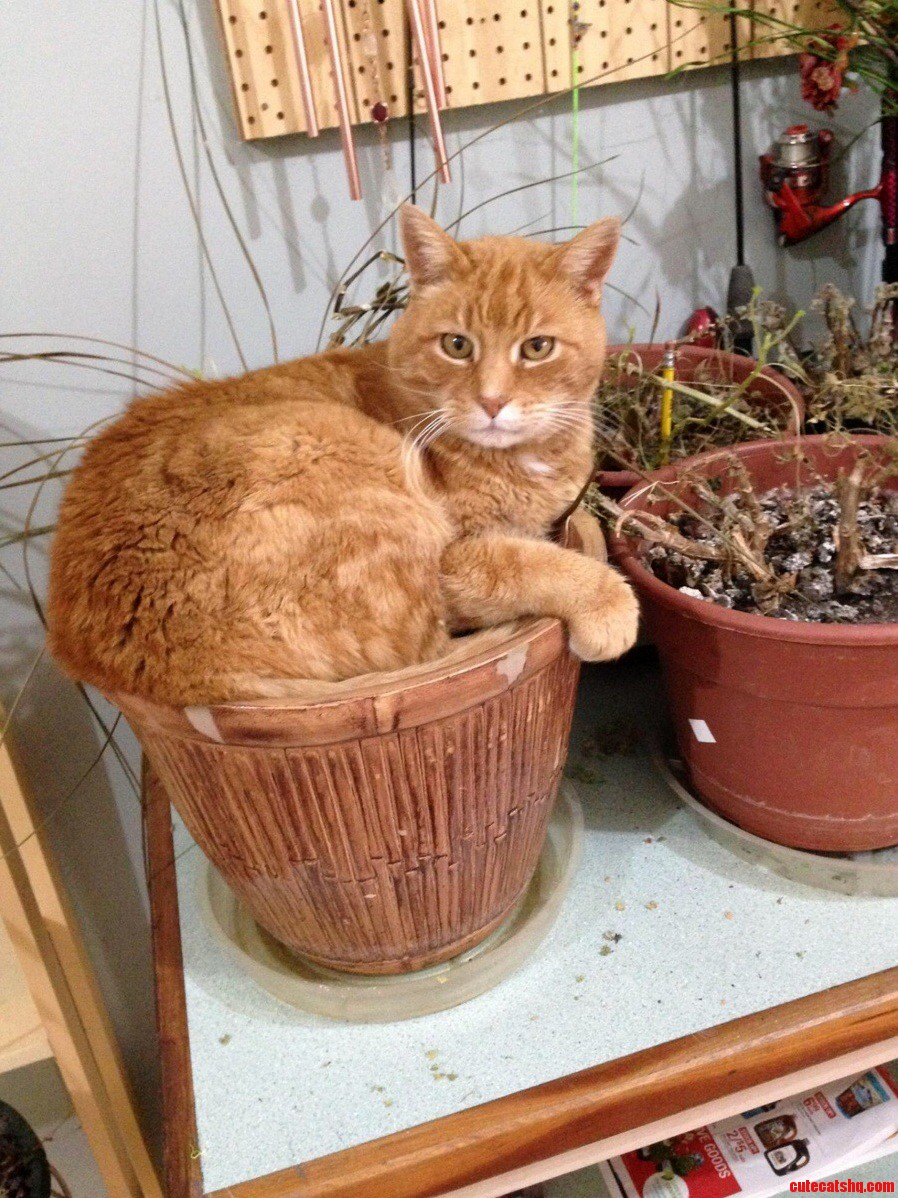 Sure this pot looks comfortable…