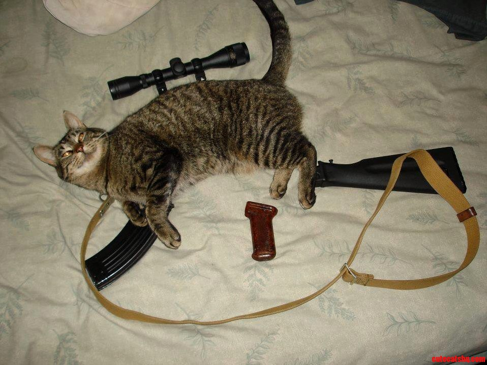 Tactical cat | Cute cats HQ - Pictures of cute cats and ...
