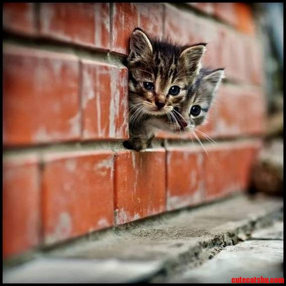 Taking a peek from the wall