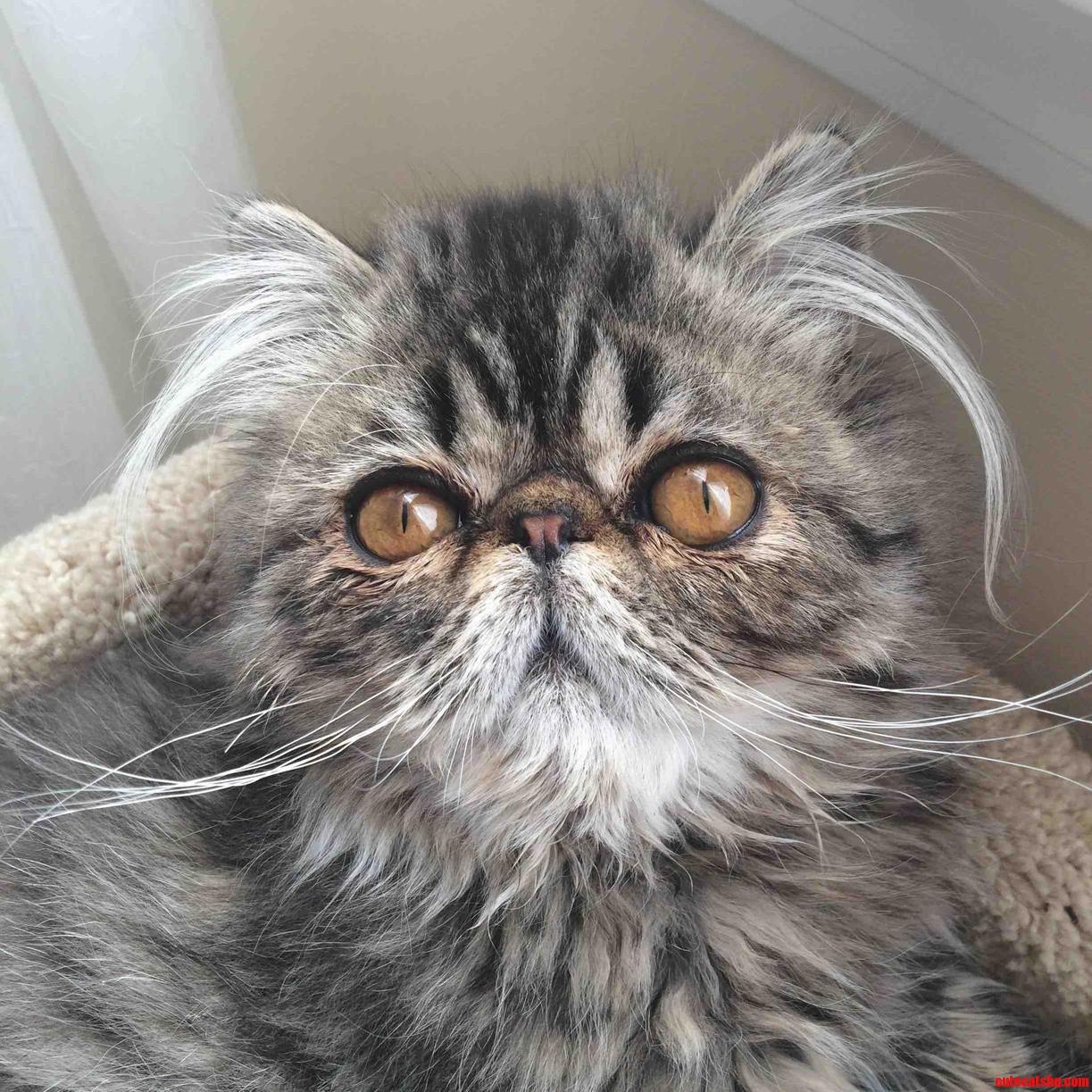 This is my kitten schnicklefritz