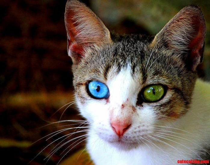 Those eyes were amazing