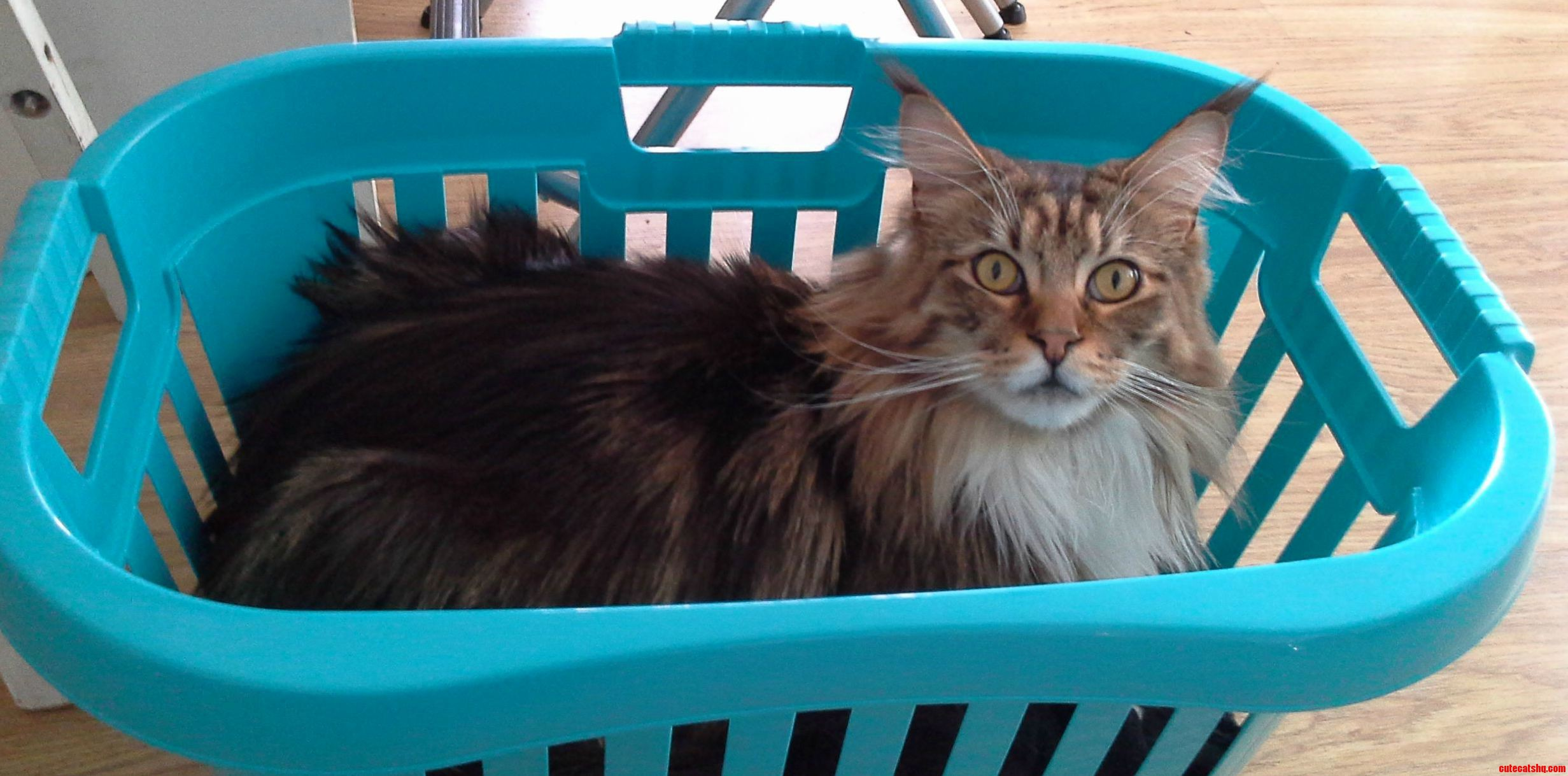What human i like fresh laundry too