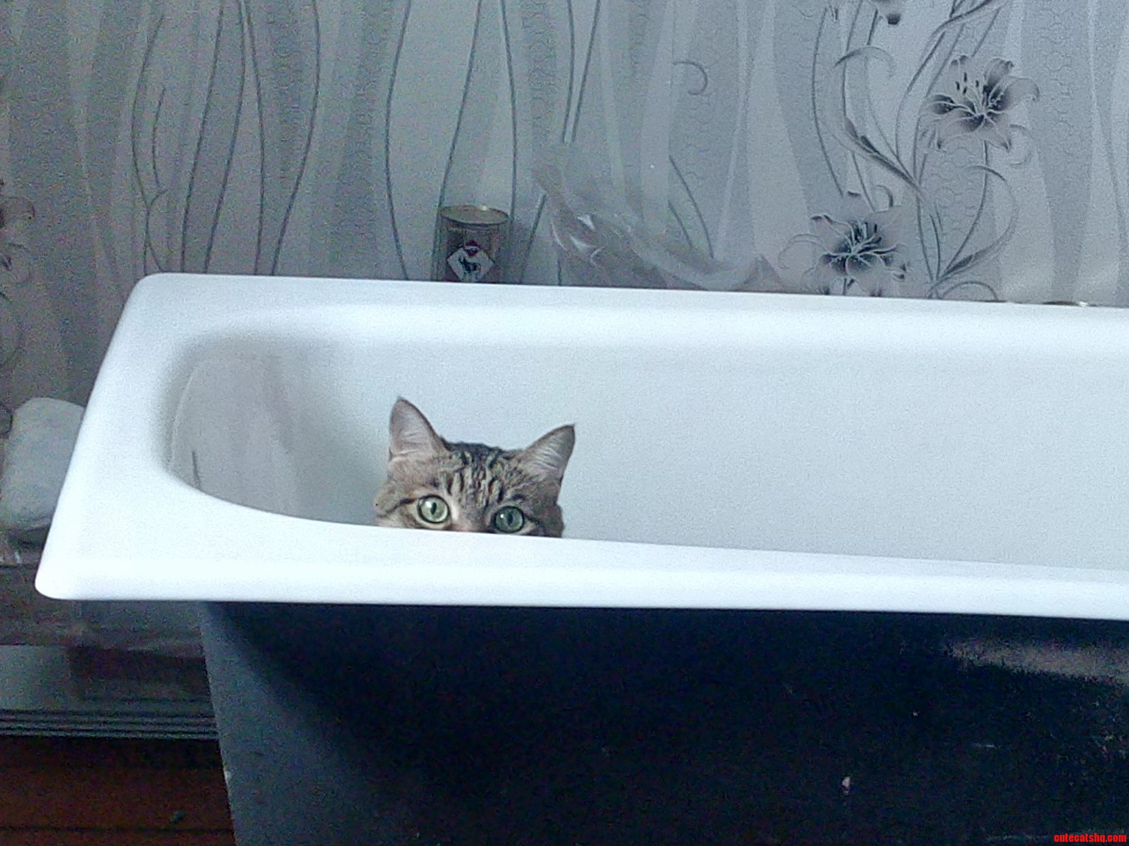 Bought new bathtub recently and boris decided to play with it ...