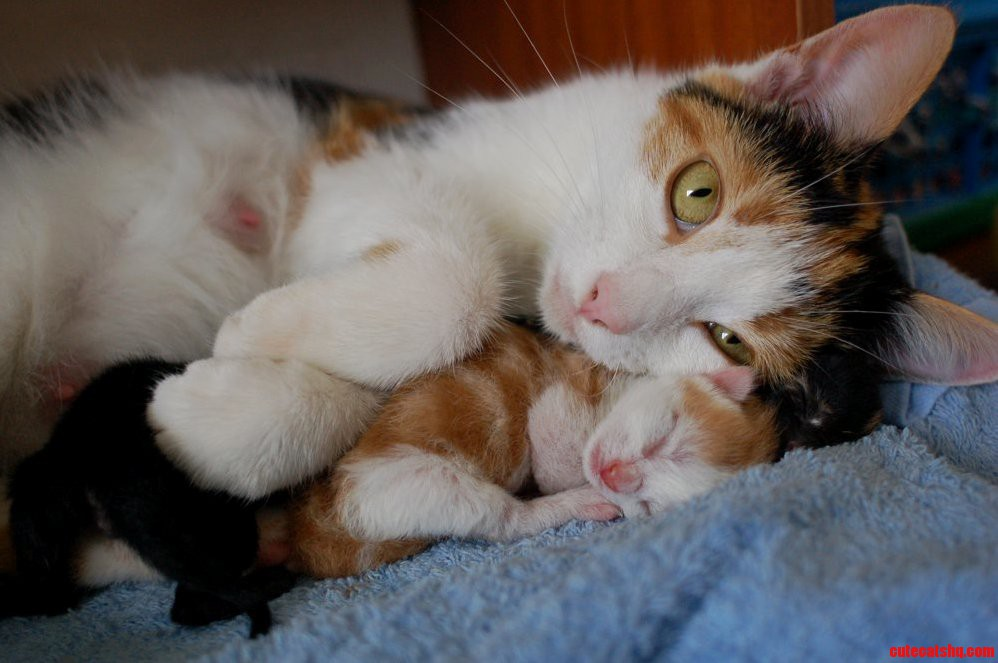 Cat snuggling her day old kittens
