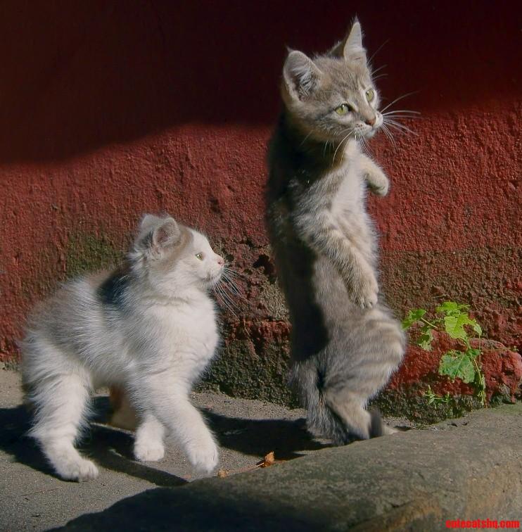 Evolution of kitty