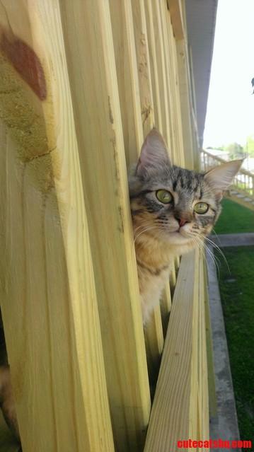 Friendliest cat i ve ever met