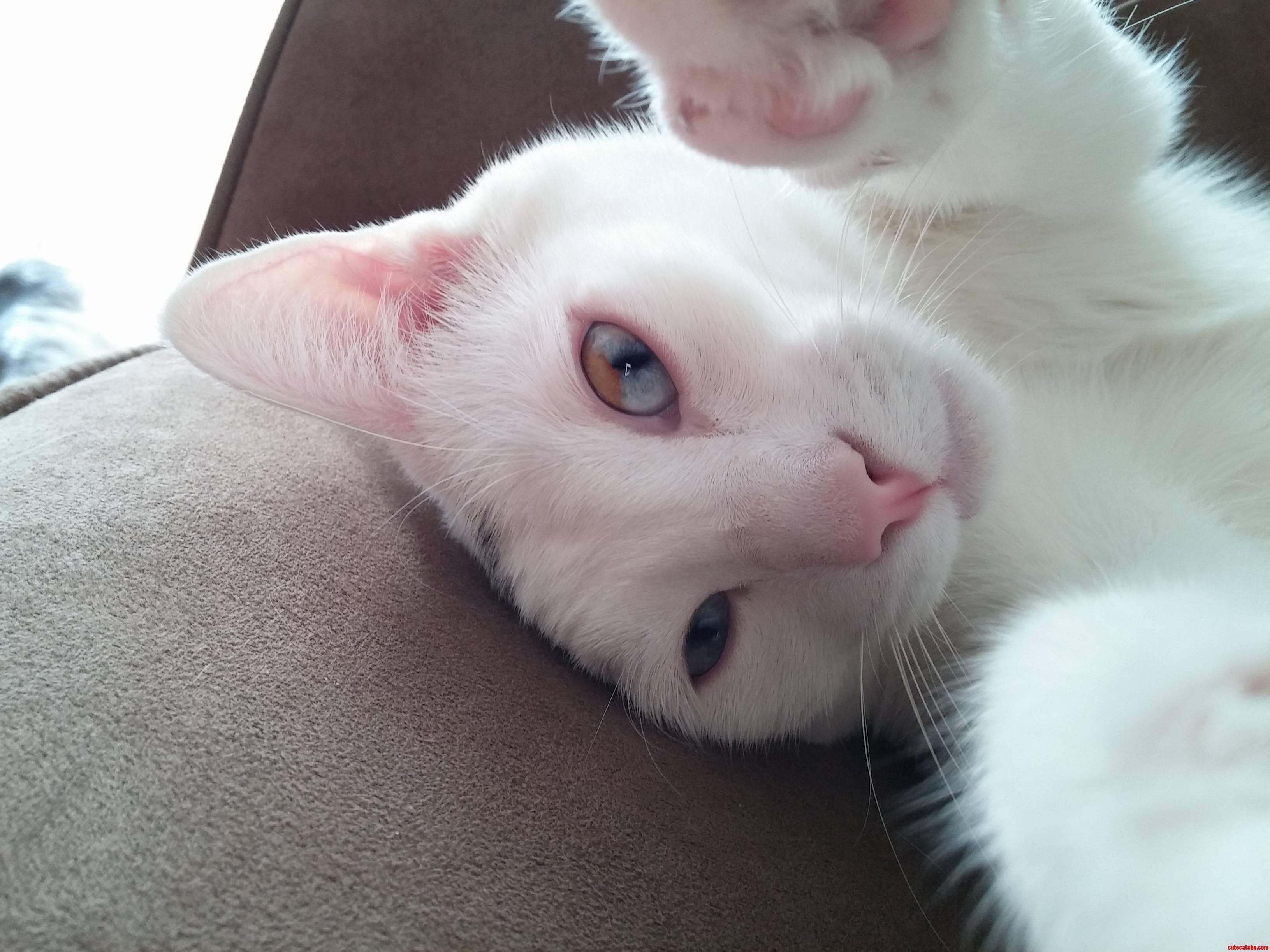 Happy 3rd birthday my odd-eyed kitty.