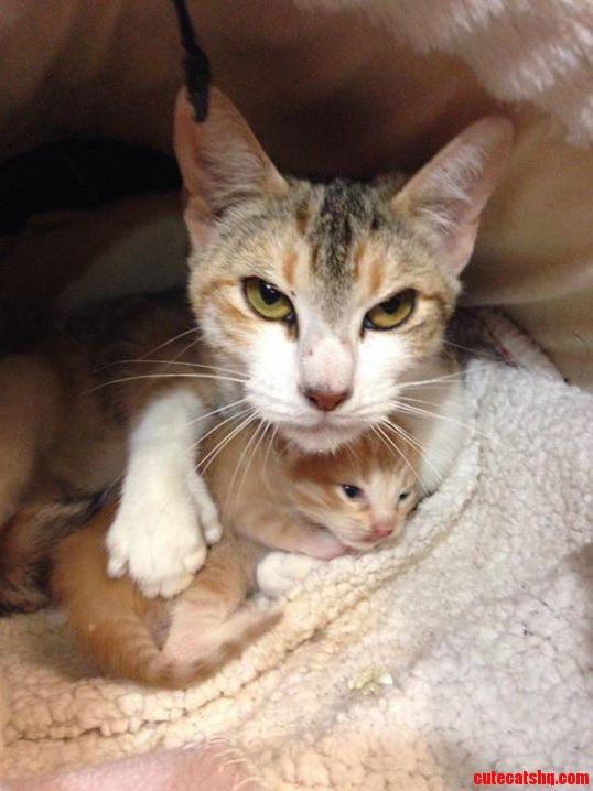I ll keep you safe kitten.