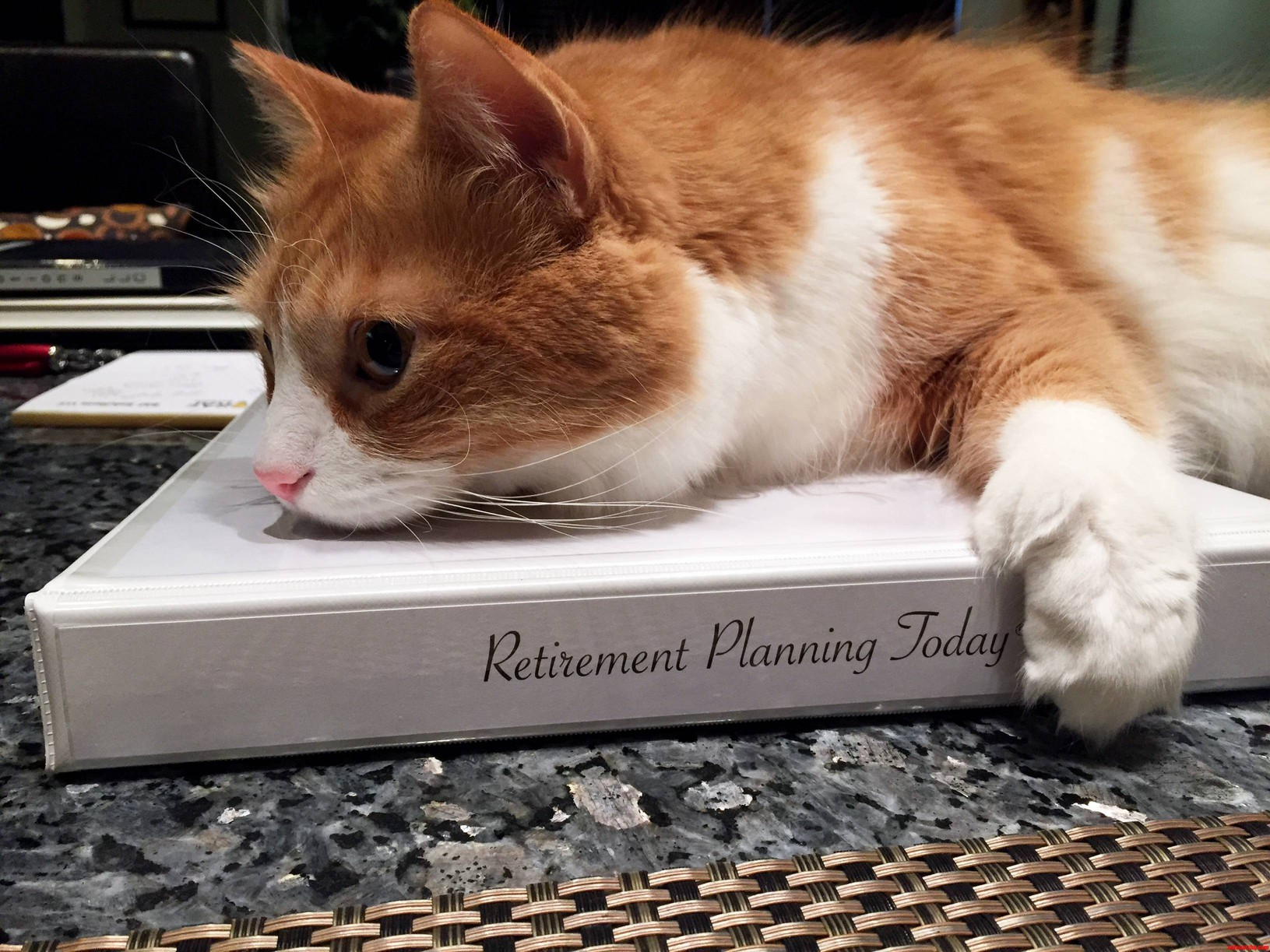 Its never too early to start planning for retirement…especially in cat  years | Cute cats HQ - Pictures of cute cats and kittens Free pictures of  funny cats and photo of cute