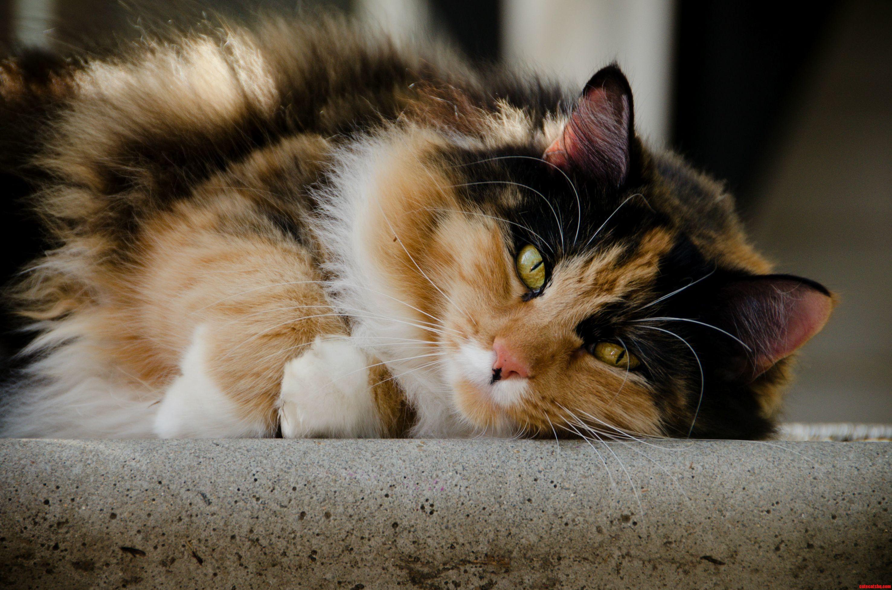 Kit kat always effortlessly beautiful..