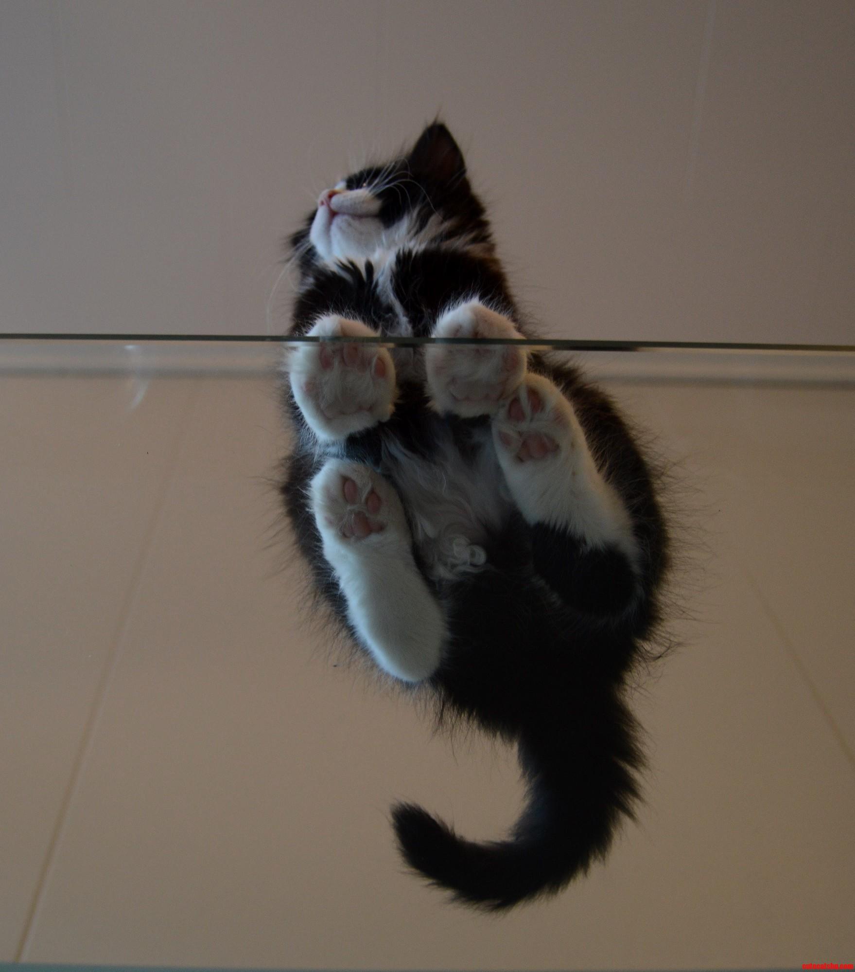 Kitten from below