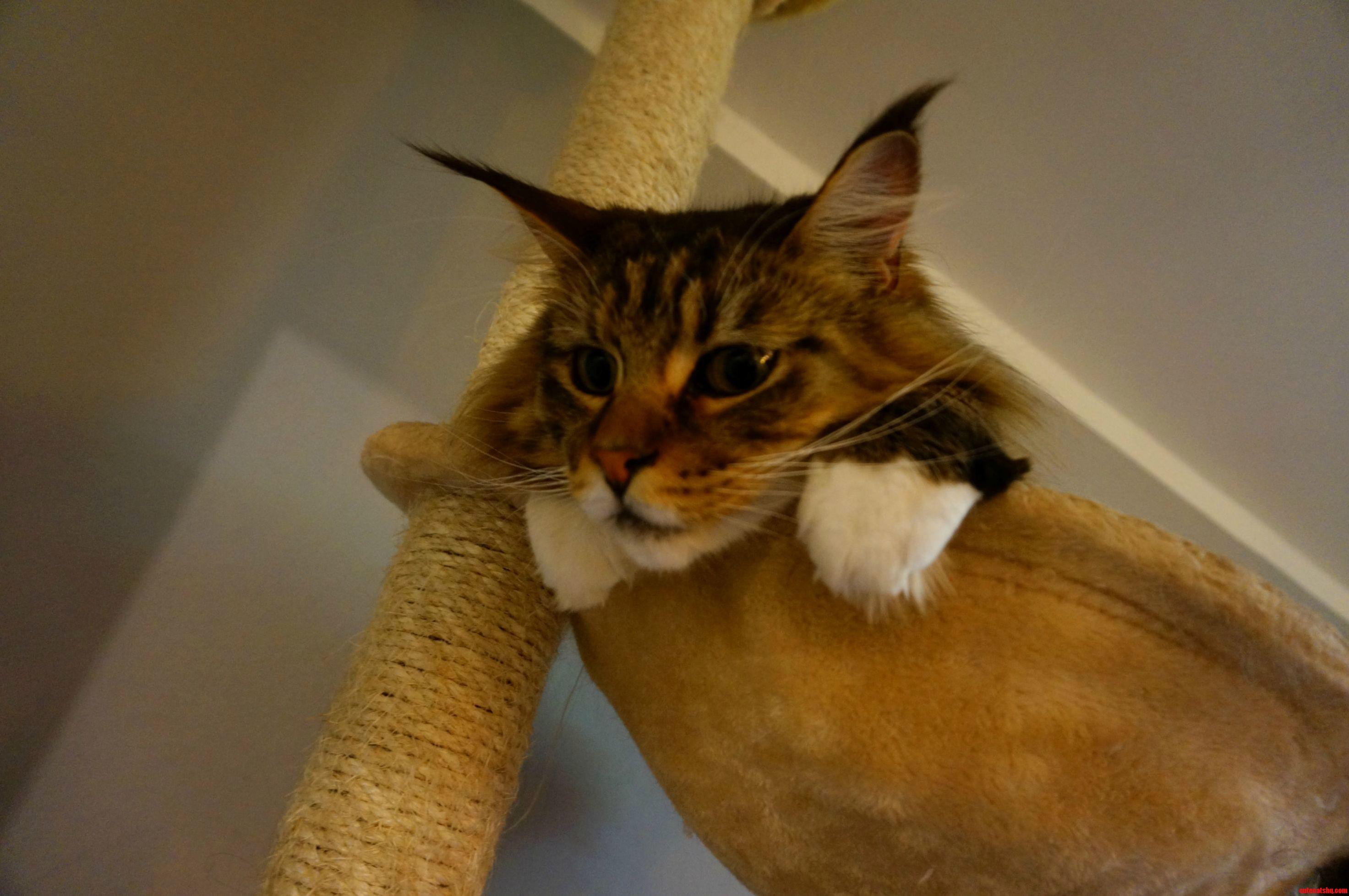 Leon is relaxing in his hammock