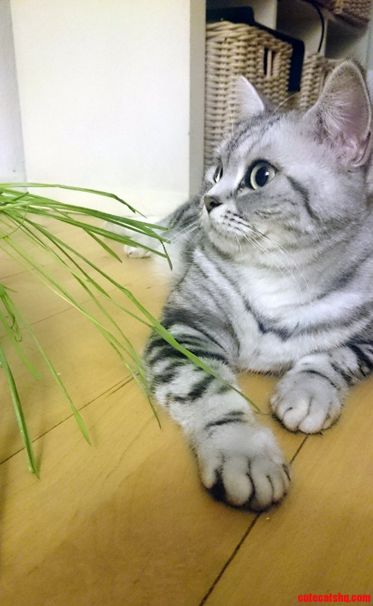Lookin cute next to her cat grass