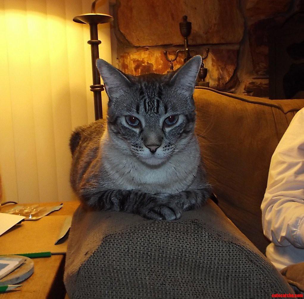 Mr. cat. chillin like a boss