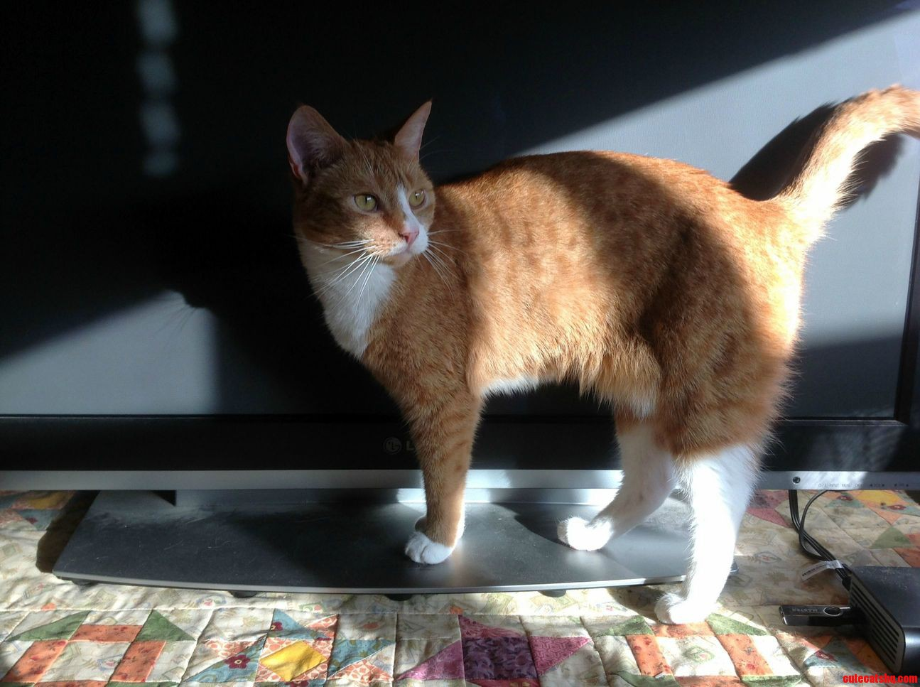 My beautiful ginger girl in the morning sun.