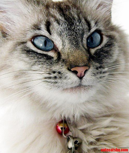 Serious Face. | Cute cats HQ Free pictures of funny cats ...