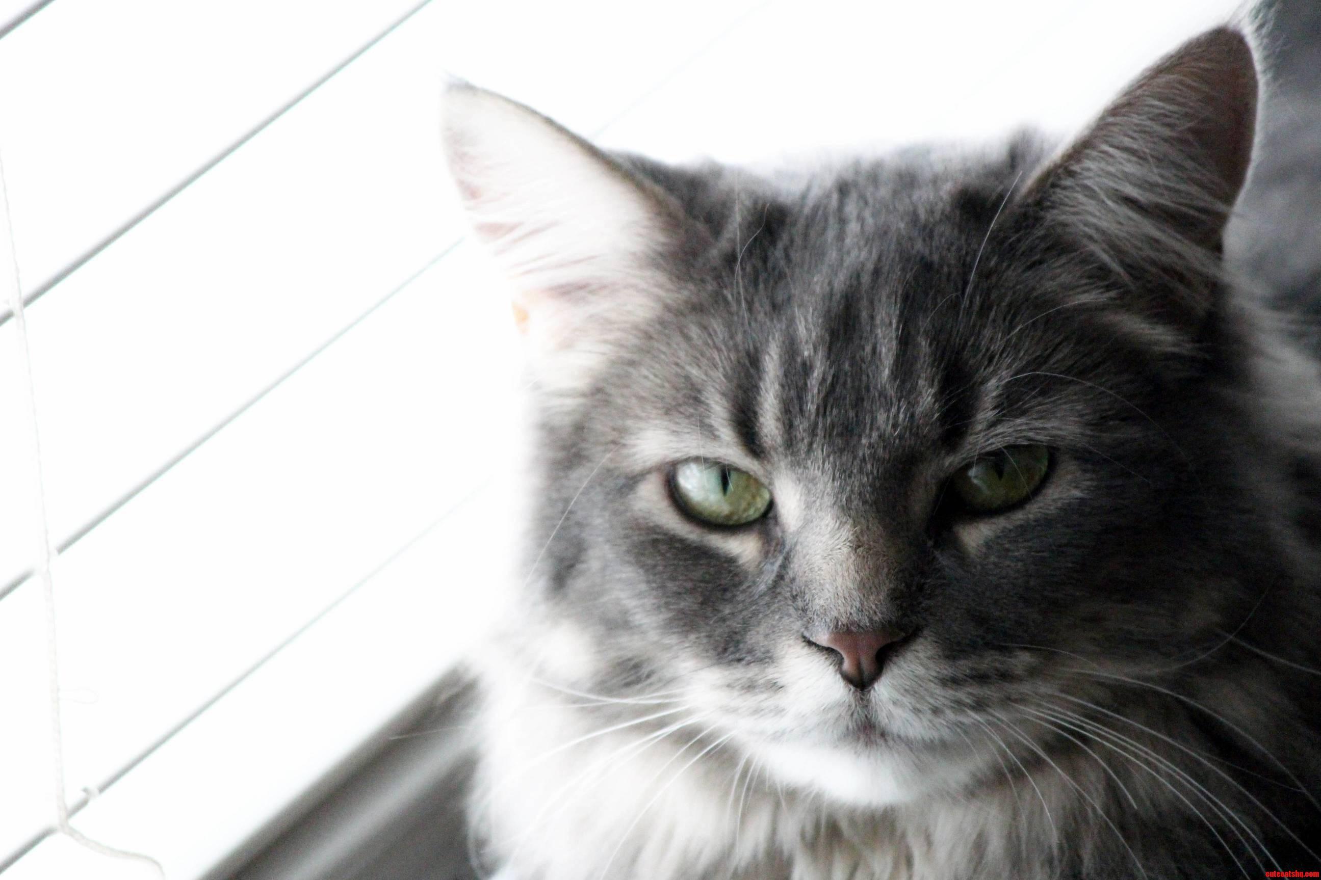 My cat scoutkiki looking judgmental as always